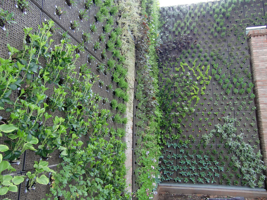 Giardino verticale best download parete verde giardino verticale immagine stock immagine di - Giardino verticale madrid ...