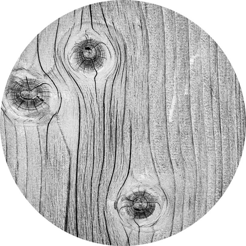 Il tronco d'albero come metafora della memoria: proprio come gli anelli di un tronco d'albero così nessuno strato della storia di un popolo deve essere eliminato. Questa è la memoria collettiva.